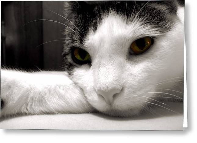 Fabulous Feline Greeting Card by JAMART Photography