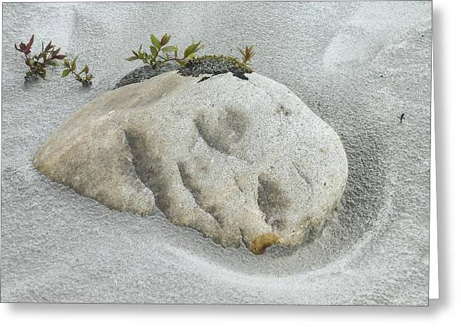 Face In The Sand At Baird Glacier Outwash Greeting Card