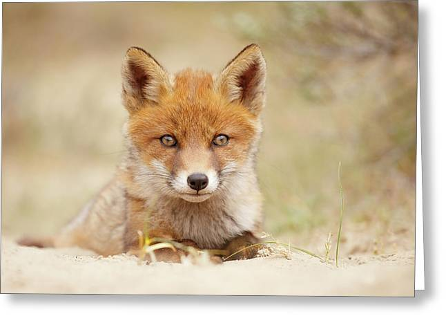 Face Of Innocence - Red Fox Kit Greeting Card