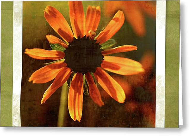 Face The Day Greeting Card by Bonnie Bruno