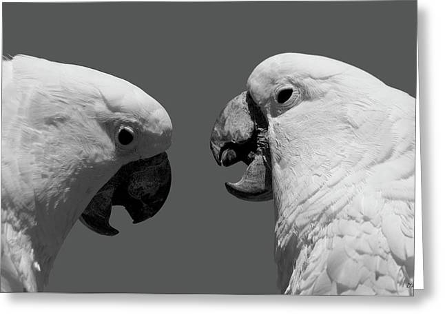 Greeting Card featuring the photograph Face To Face Iv Bw by David Gordon