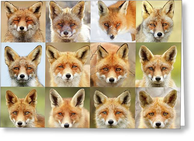 Faces Of Foxes Greeting Card