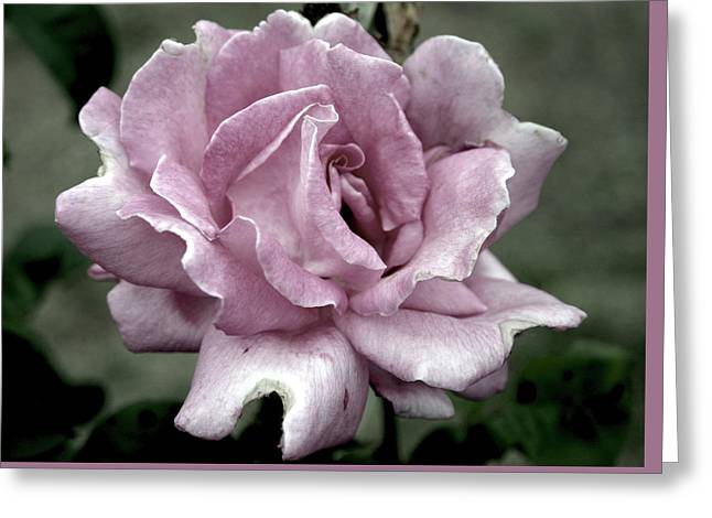 Faded Beauty Rose 0226 H_2 Greeting Card