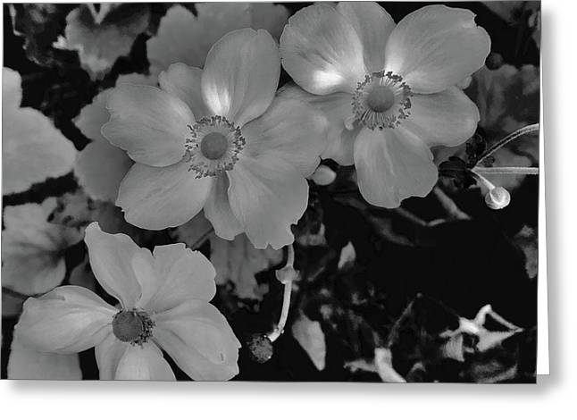 Faded Flowers Greeting Card