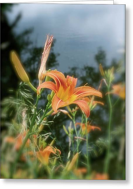 Faded Lily Greeting Card