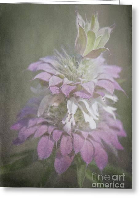 Faded Purple Greeting Card by Lisa Holmgreen