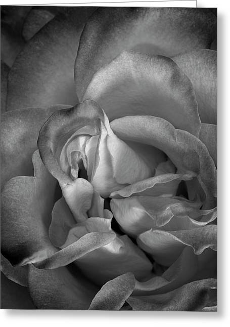 Greeting Card featuring the photograph Fading Beauty by Mike Lang