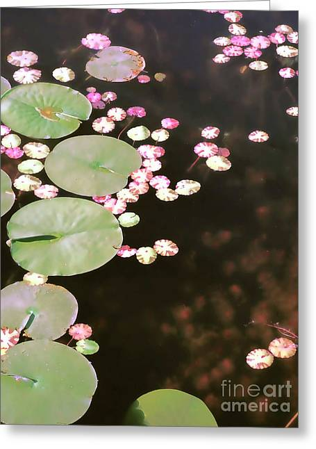 Fading Lily Pads Greeting Card