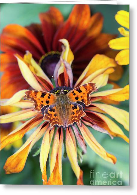 Fading Summer Glory Greeting Card by Tim Gainey