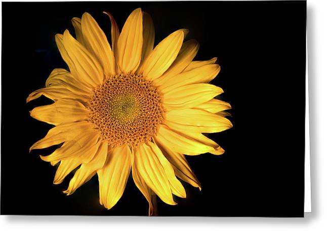 Fading Sunflower Greeting Card