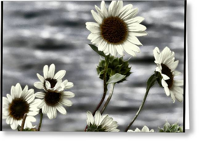 Greeting Card featuring the photograph Fading Sunflowers by Susan Kinney