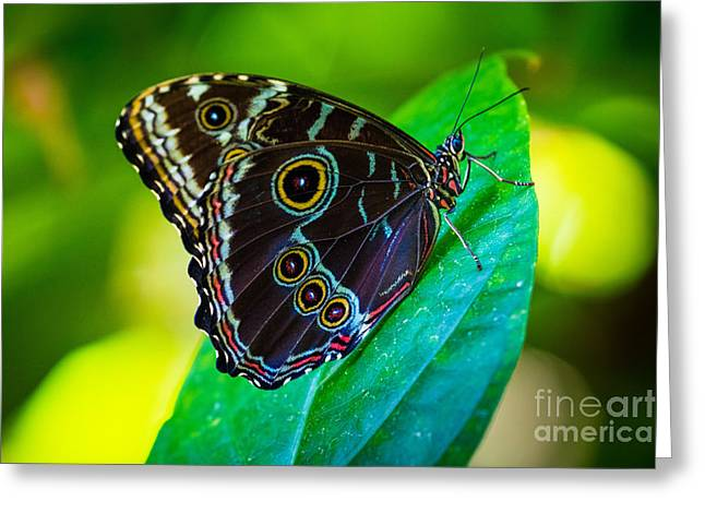 Fair Park Butterfly Greeting Card by Inge Johnsson