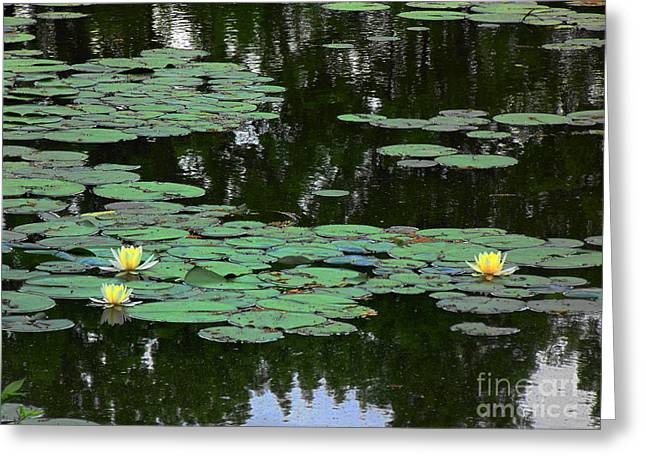 Fairmount Park Lily Pond Greeting Card