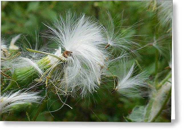 Fairy Flower Greeting Card