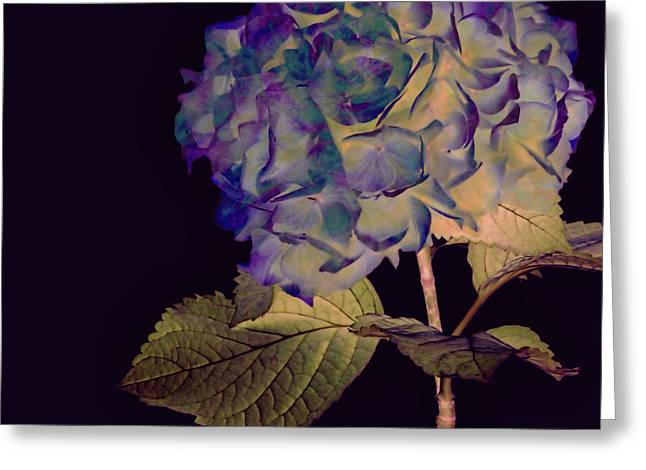 Fairy Hydrangea Greeting Card