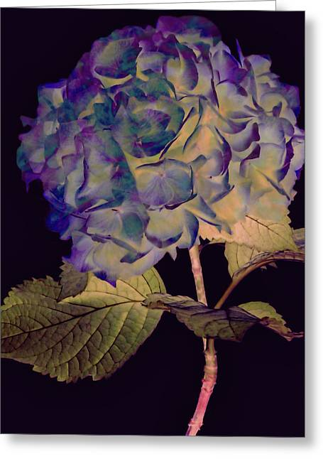 Fairy Hydrangea Greeting Card
