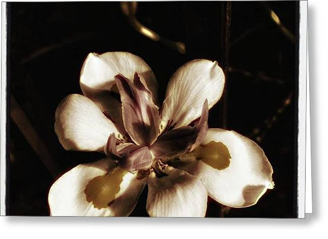 Greeting Card featuring the photograph Fairy Iris. A Butterfly Landed On My by Mr Photojimsf