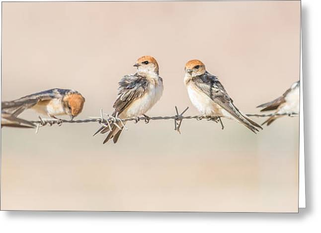 Fairy Martins Greeting Card