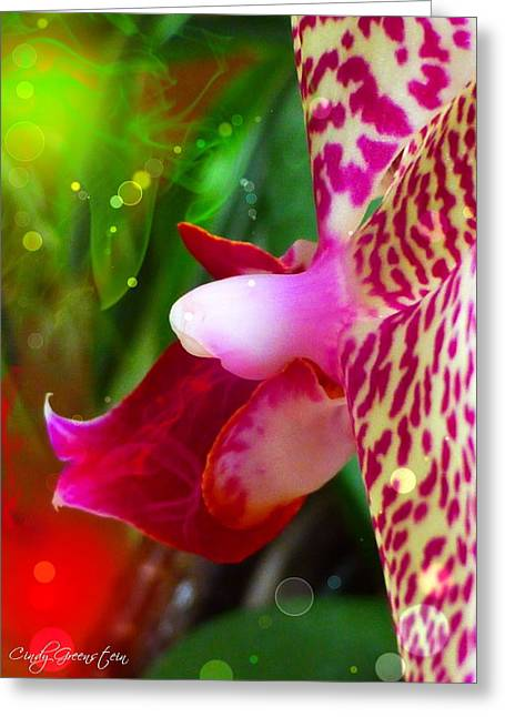 Greeting Card featuring the photograph Fairy Orchid by Cindy Greenstein