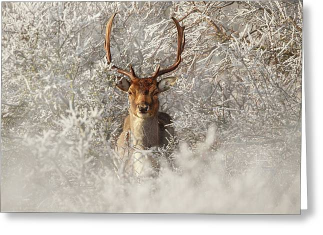 Fairytale Fallow Deer In The Frost Greeting Card
