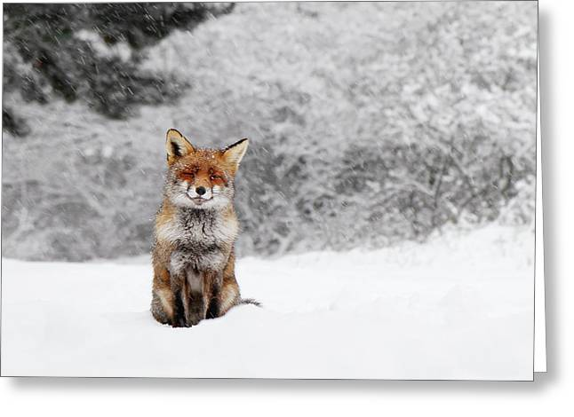 Fairytale Fox IIi - Red Fox In The Snow Greeting Card