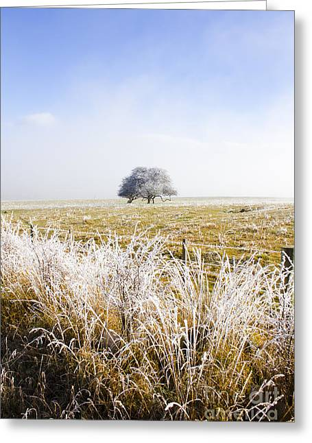 Fairytale Winter In Fingal Greeting Card by Jorgo Photography - Wall Art Gallery