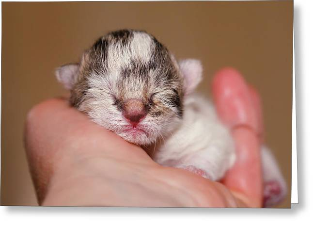 Faith - Cute Kitten In A Hand Greeting Card