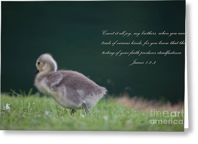 James 1 Greeting Card by Dale Powell