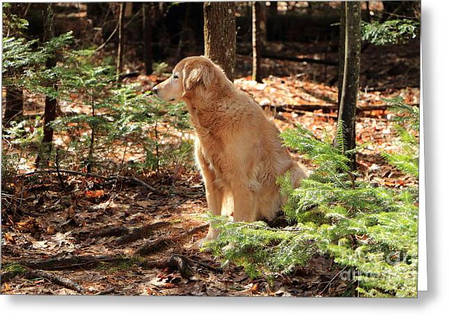 Faithful Companion Always Greeting Card