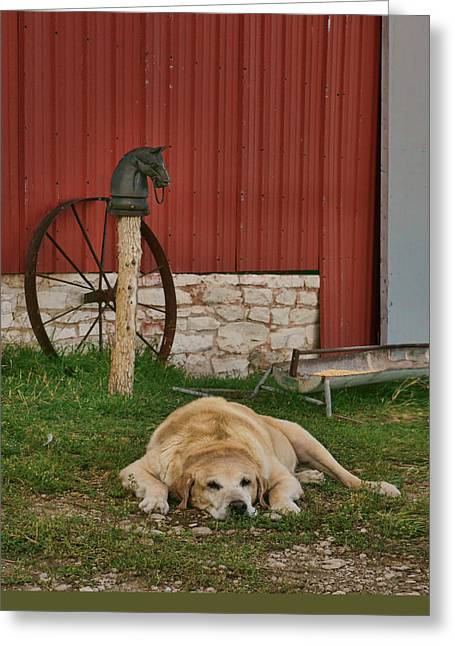 Faithful - Farm Dog Greeting Card by Nikolyn McDonald