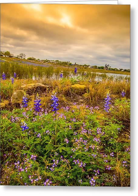 Zapata Falcon Lake 2 Greeting Card by Leticia Latocki