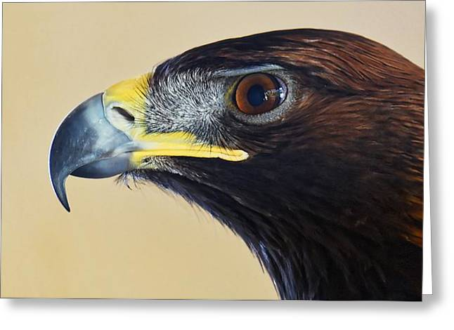 Falconer's Hawk - Harris Hawk Greeting Card