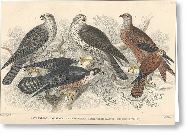 Falcons Greeting Card