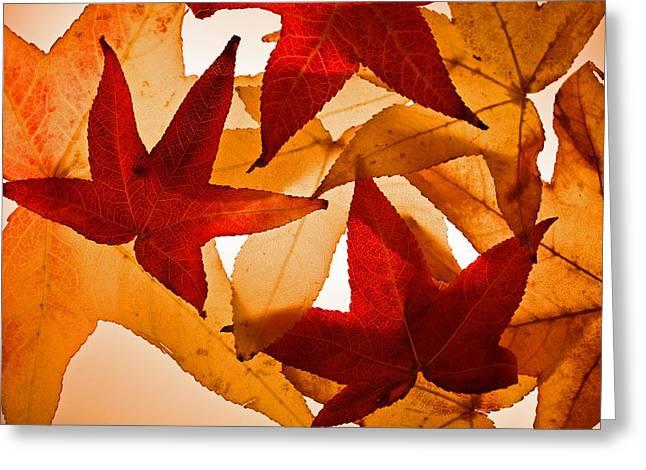 Fall 002 Greeting Card by Bobby Villapando