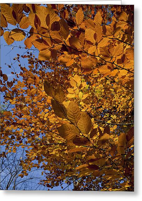 Fall 2010 51 Greeting Card by Robert Ullmann