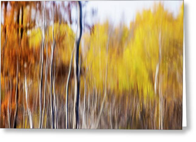 Greeting Card featuring the photograph Fall Abstract by Mircea Costina Photography