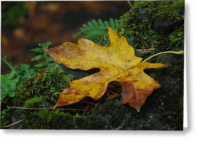 Fall Alone Greeting Card by Lori Mellen-Pagliaro