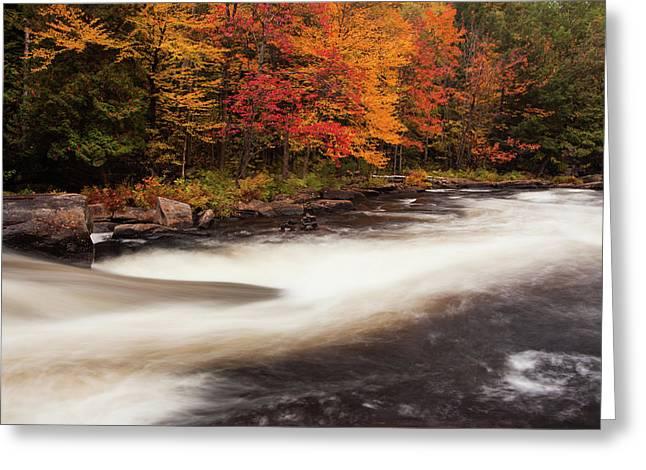 Fall At Oxtongue Rapids Greeting Card