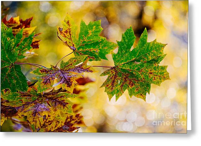 Fall Changes Everything Greeting Card by MaryJane Armstrong