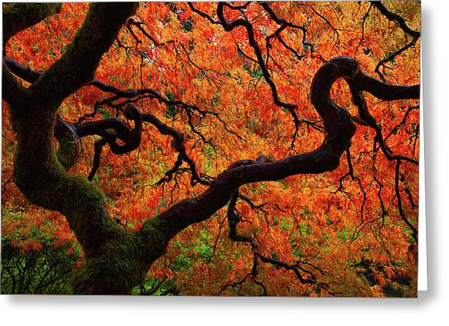 Fall Chaos Greeting Card by Darren White