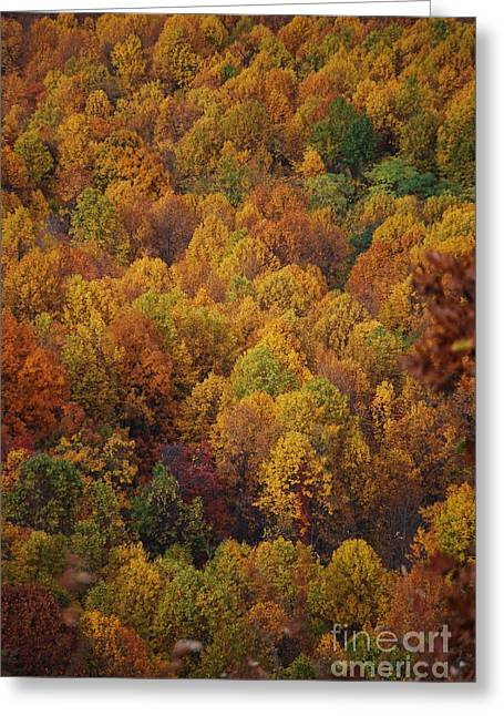 Fall Cluster Greeting Card by Eric Liller