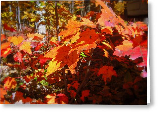 Fall Color 2 Greeting Card by John Julio