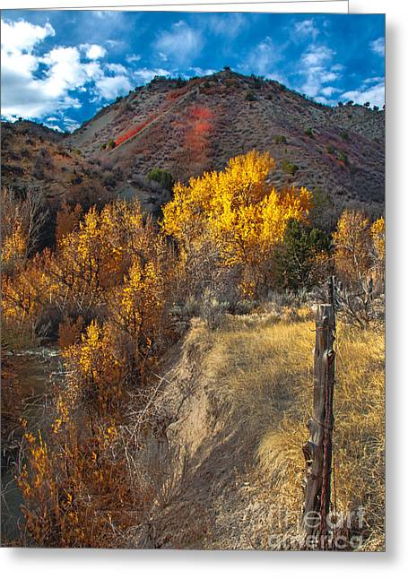 Fall Color Along Fence Line Greeting Card