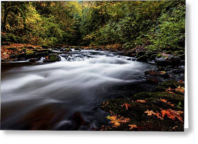 Fall Color At Cedar Creek Greeting Card