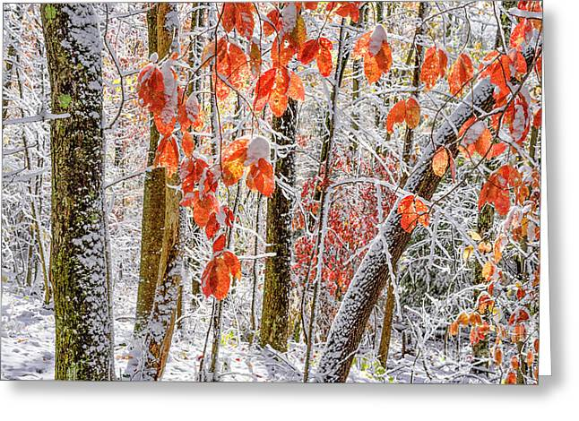 Fall Color Autumn Snow Greeting Card