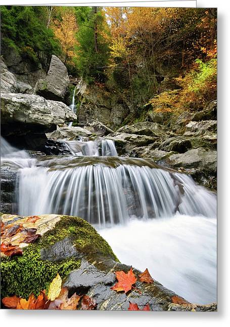 Fall Color Bash Greeting Card