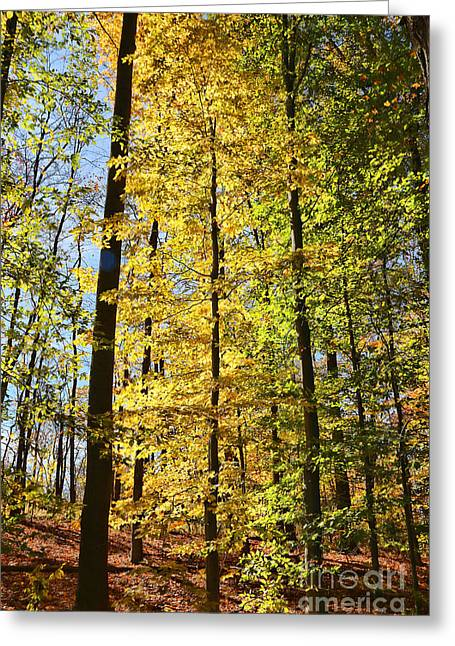 Fall Color Cuyahoga Valley National Park 2259 Greeting Card by Jack Schultz