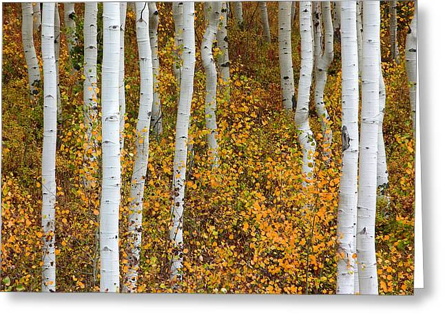 Fall Color Greeting Card by Dori Peers