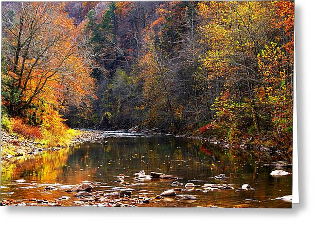 Allegheny Greeting Cards - Fall Color Elk River Greeting Card by Thomas R Fletcher
