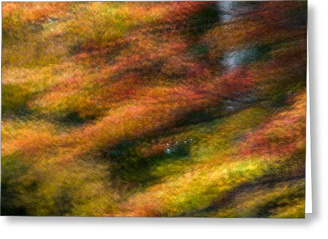 Fall Color Impressions Greeting Card